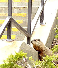 [Peering up onto steps]
