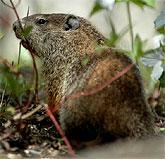 [Groundhog]