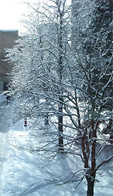 [Snow-covered trees beside MC]