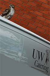 [Hawk atop catering truck]