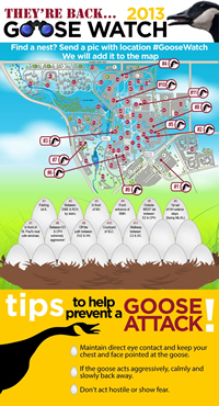 Goosewatch infographic.