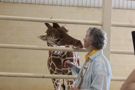A giraffe and Professor Anne Innis Dagg share a moment.